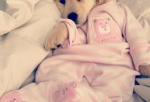♥DOGS♥