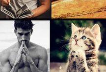 Cats of Pinterest