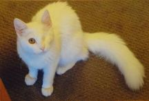 Available Cats and Kittens / Cats and Kittens Available for Adoption