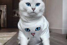 Kedi uzay