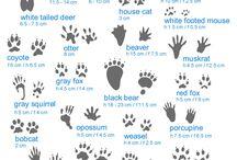 Zoology - Mammals