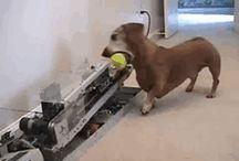πιάσε την μπάλα