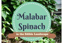 Edible landscapes