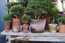 Verdure terrasse