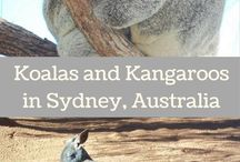 Australian animals - best places to find them!