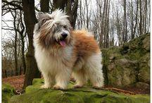 Wuschelhunde