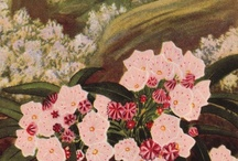 Botanical Illustration / by Debra