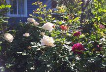 садовые истории / о жизни сада и о саде в жизни
