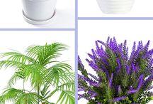 Plants to buy