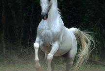 lovak