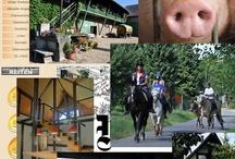 Urlaub auf  dem Bauernhof / Landferien für groß und klein: Bauernhöfe, Kinder-Ferienhöfe, Reiterhöfe, WInzerhöfe in Deutschland