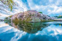 其の他桜景色  昔の風景
