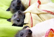bats. / Spooky & Cute ALL Wrapped up in ONE!! / by ~~ Cathleen ~~