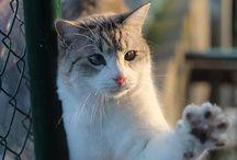 Les chats de l'enclos (APA 63)
