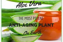 Aloe Vera Tips