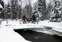 Iditarod Challenge  - Alaska