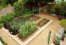 Vegetable garden / Vege garden