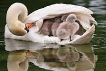 A Mother's Love  / these would be great frames around a child's nursery/bedroom / by Dianne Hollister