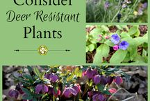 Deer Resistant Plants / Find plants that are deer-resistant, and learn about methods to make your garden deer-proof.