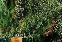 Garden / http://urbanspot.tumblr.com/