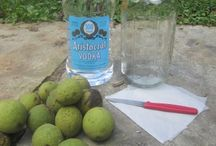 Black walnut tonic for chicken and goats