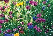 landscaping inspiration