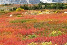 Beautiful Yukon / by Suellen Shadbolt