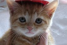 Cute Kitties / Cute Kitty Pictures