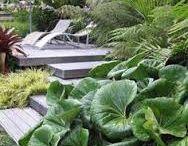 Garden - NZ Natives