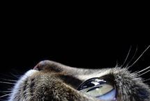 animals / by Agostino Campana