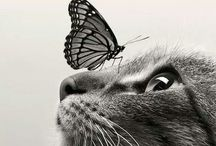 Cats / Yoyoyoyo