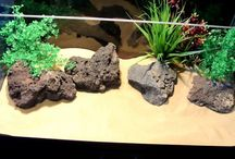 How to set up your tank, set ups available in store now