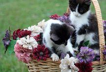 Кошечки и другие - удачное фото
