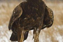 Eagle - amazing & strong