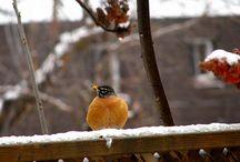Birds / by Judy Dunlap