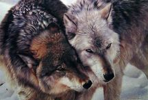 oc. hyperion / wolf » hunter » in love with his best friend