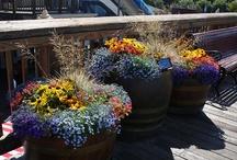 Garden/Porch
