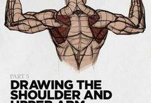 estudios de espalda