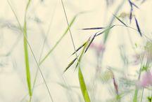 croquis herbes