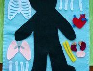 Anatomia dla dzieci