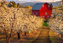 Farms, Barns and Homesteads / Old houses and green fields to fill up your daydreams. / by Radiant Life