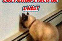 Pets / Aqui você vai encontrar várias dicas sobre pets (gatos, cachorros, felinos, pets,etc) #cachorros #gatos #bichosdeestimacao #animais #gatos #pets #felinos #animais #bichosdeestimação #comocriarumgato #animaldoméstico #petisco #roupasparapets