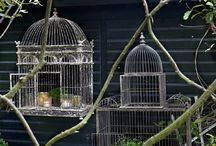 Bird Cages...