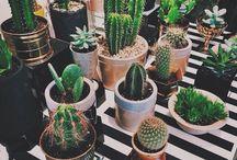 garden things ~