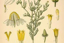 Herbs,plants&flowers / by Tausha Johnson