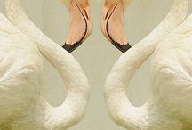 Flamingo.. / by Melanie Taylor