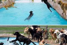 köpek  partisi