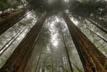 Sequoia/Redwoods National Park