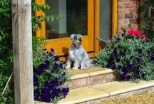 Pet-friendly pads / by Holiday Lettings
