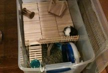 hamster cage-tips